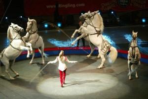 Цирк с конями в антимонопольной службе