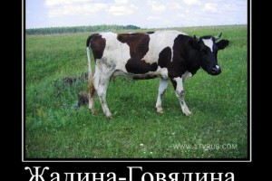 Жадина-говядина волгоградский картелист