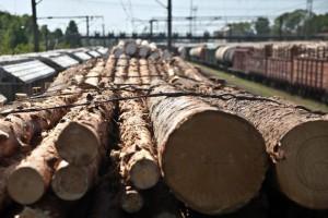ФАС изменит методику контроля за экспортными ценами