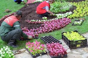 Суд поддержал ФАС в деле о цветочном картеле