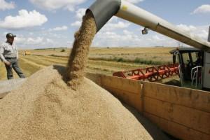ФАС против усилений позиций России на мировом рынке зерна
