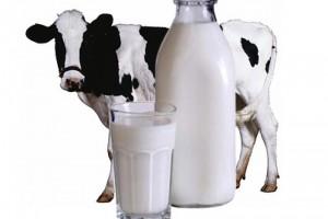 ФАС опять ищет злых молочников