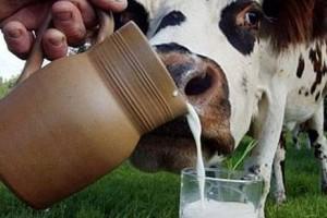 Покупать у своей фермы молоко дороже нельзя