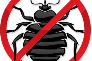 ФАС выявила и наказала «монополиста» по борьбе с грызунами и насекомыми