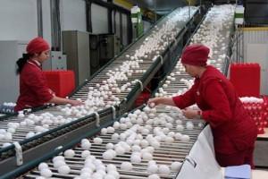 Суд признал правоту ФАС в деле о монопольно высокой цене на яйцо куриное в Ленобласти