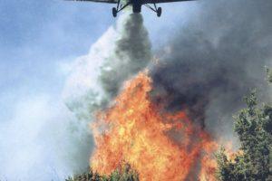 Суд отменил решение ФАС о сговоре при торгах на организацию тушения лесных пожаров в Красноярском крае