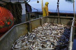 Суд не дал ФАС вмешаться в распределение рыбных квот