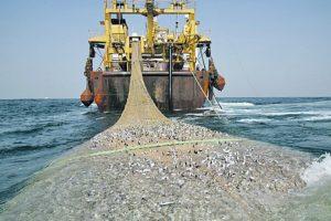 Суд поддержал ФАС в двух делах против Росрыболовства о конкурсе на вылов рыбы у берегов Чукотки