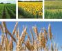 Штраф ФАС на белгородское ООО «ДИР» за антиконкурентное соглашение на рынке растениеводства отменен судом