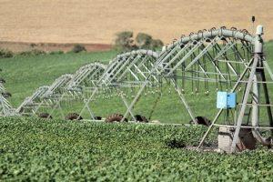 Белгородская система поддержки сельского хозяйства опять не понравилась ФАС