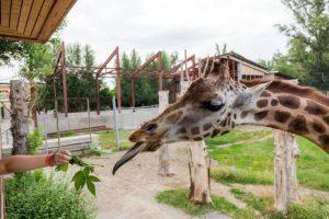Кассация отменила решение ФАС против ростовского зоопарка